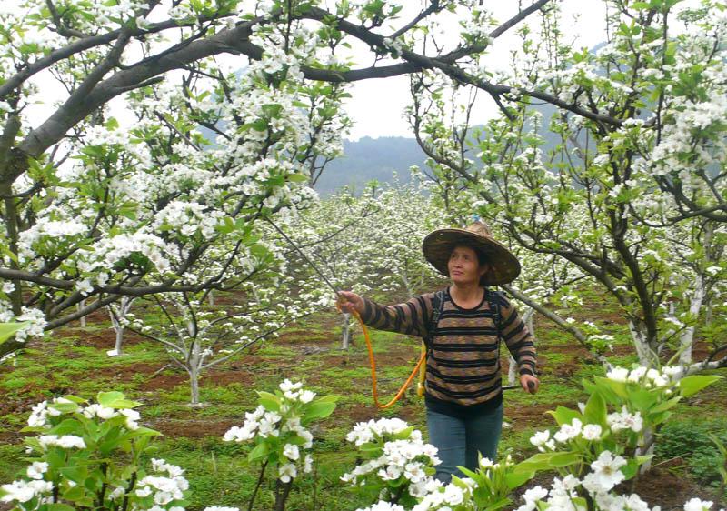春分气象条件与农事活动