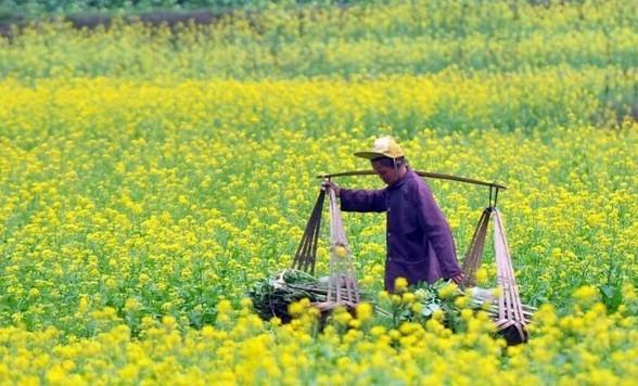 惊蛰节农事习俗