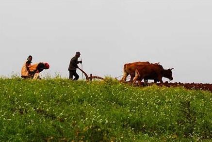 惊蛰农事习俗