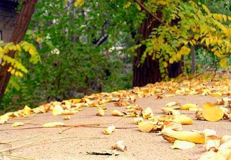 秋分:播麦前话整地施肥