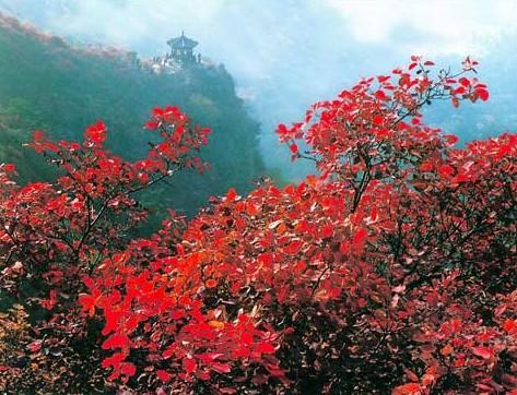 霜降寻找国内最美赏枫地