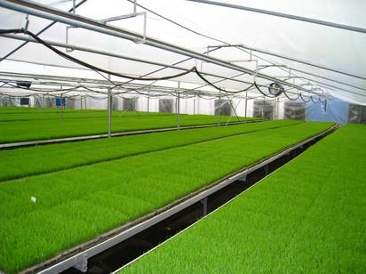 雨水大棚蔬菜浇水技巧