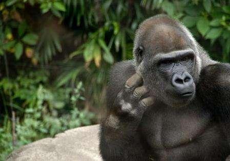共同保护濒临灭绝的野生动物种类