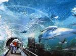 暹罗海底世界