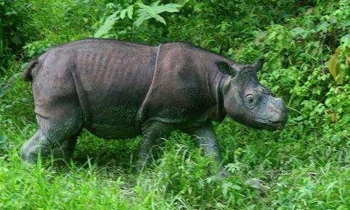 马来西亚踏缤野生动物保护区