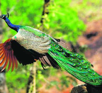 印度马纳斯野生动植物保护区