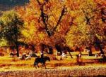 科尔沁珍禽自然保护区