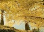 古银杏国家森林公园