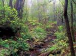 加拉霍艾国家公园