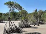 乔木海岸保护区