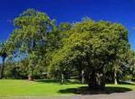 悉尼皇家植物园旅游攻略