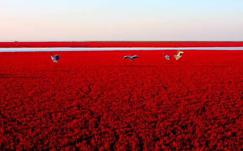 红海滩风景区电话_盘锦红海滩旅游景点_盘锦红海滩旅游景点介绍