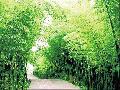 3、4月上海出发_安吉中国大竹海、藏龙百瀑四星品质二日游