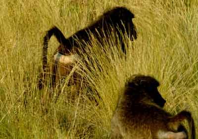 南非比林斯堡野生动物保护区景点图片|南非比林斯堡