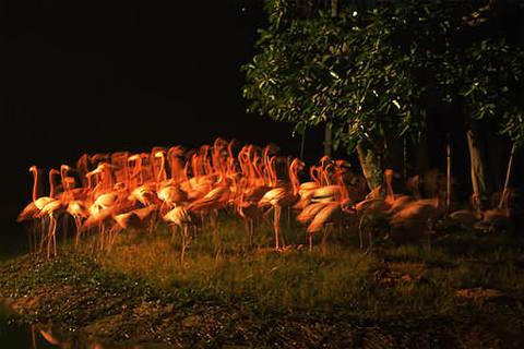 长隆夜间动物世界