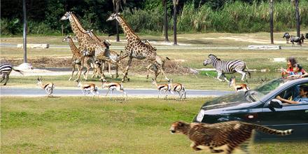广州香江野生动物世界景点图片 广州香江野生动物