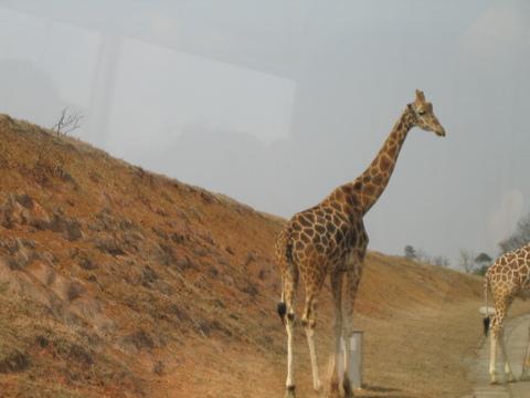 成都野生动物世界景点图片|成都野生动物世界旅游