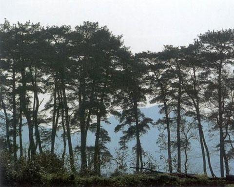 天童森林公园