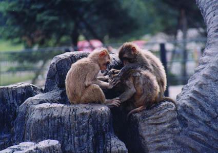 冰川动物乐园11