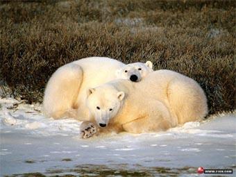 沈阳冰川动物乐园景点图片|沈阳冰川动物乐园旅游