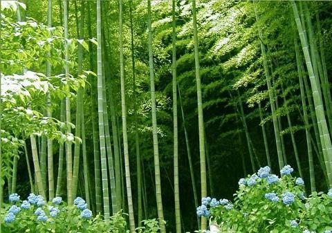 浙江十大绿色生态旅游景点