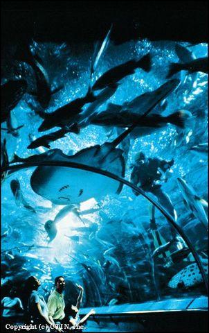 新加坡海底世界景点图片|新加坡海底世界旅游景点