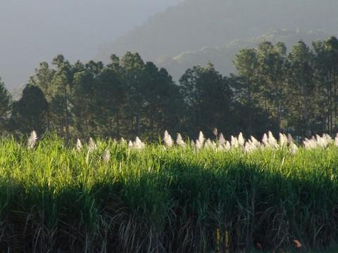库仑达热带雨林
