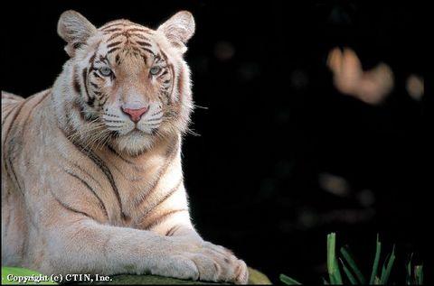 新加坡新加坡动物园景点图片|新加坡新加坡动物园
