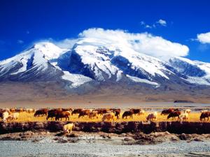 2016年年底新疆将新增14处自驾营地